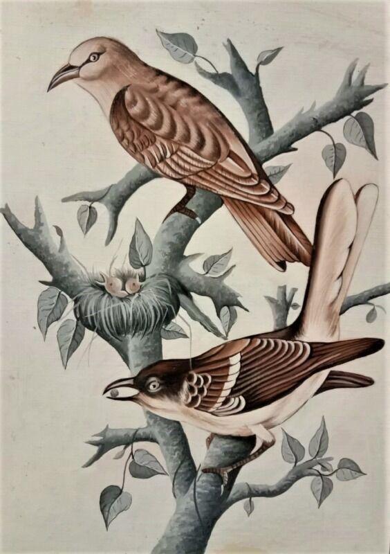 My bird series 1