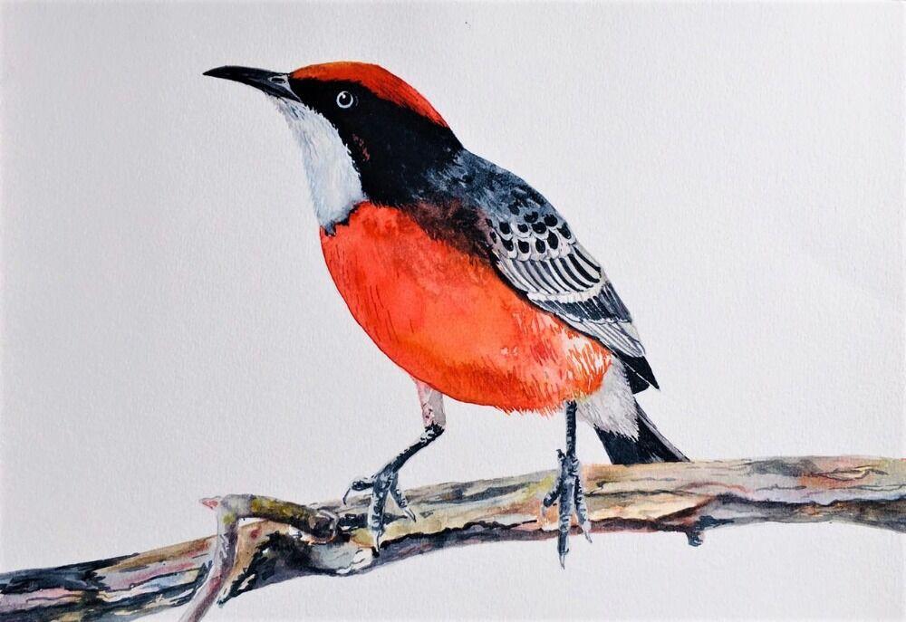 Bird Series 4