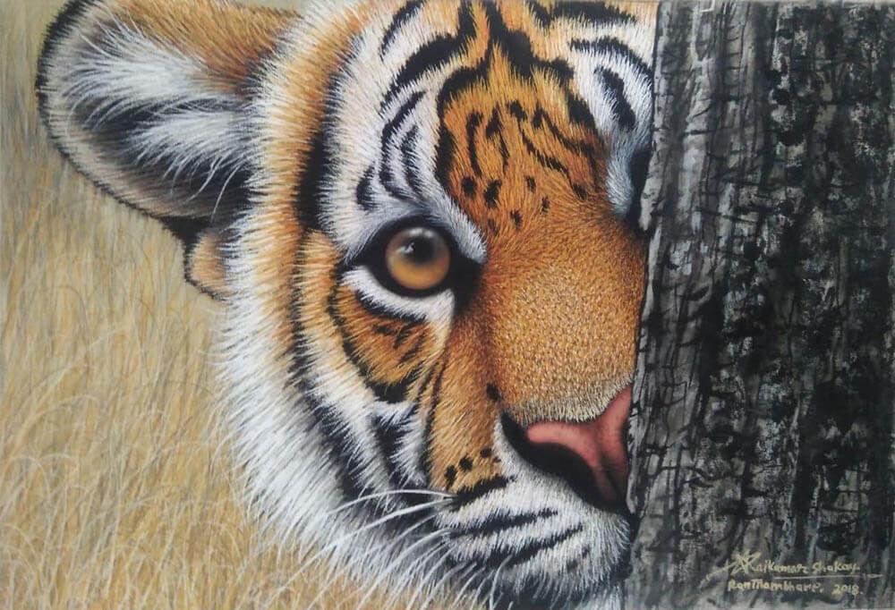 Tiger0012
