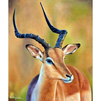 Gazing Deer