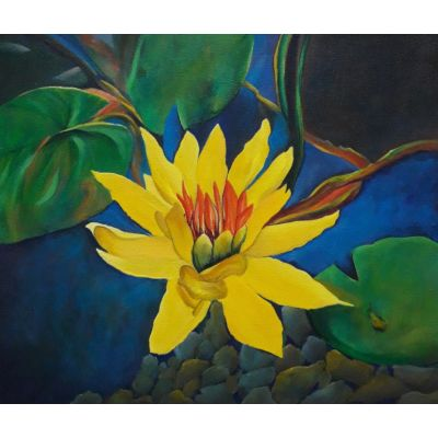 Flower_Yellow Water Lily