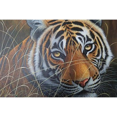Tiger0011